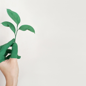 person-s-left-hand-holding-green-leaf-plant - Pexels - Alena Koval