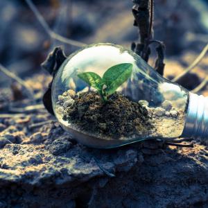clear-light-bulb-planter-on-gray-rock - Pexels - Singkham